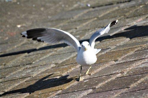 animal  bird  gull