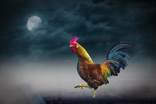 animal  night  moon