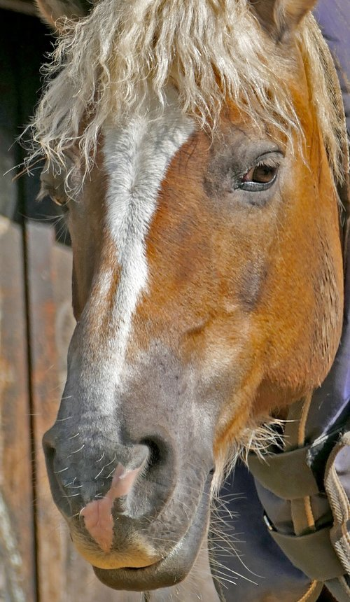 animal  mount  horse