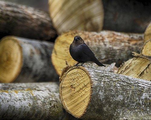 animal  bird  nature