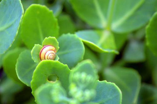 animal plant harmony