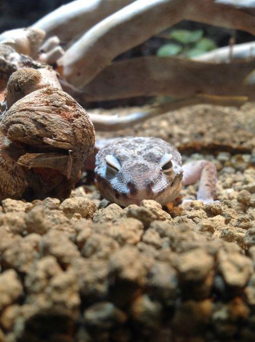 animal lizard smile