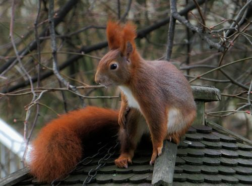 animal squirrel furry