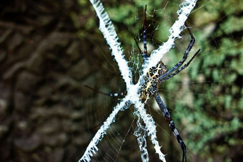 animal spider web