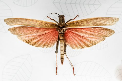 animal insect flying