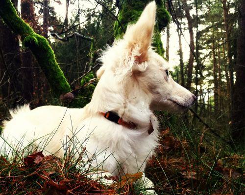 animal dog forest