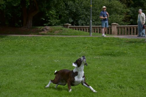 animal dog action