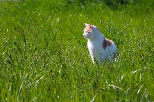 animal cat meadow