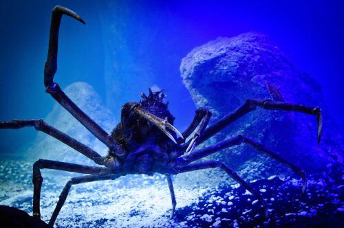 animal water underwater