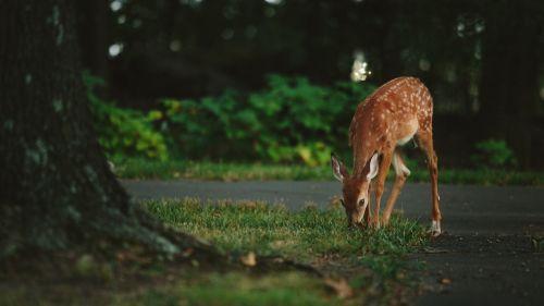 animal deer wildlife