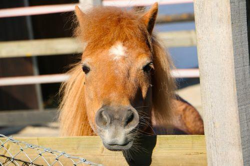 animal pony hair mane