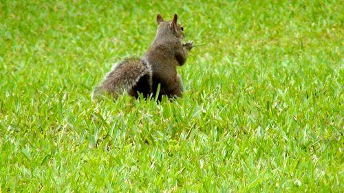 animal squirrel attitude