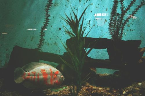 animal fish aquarium
