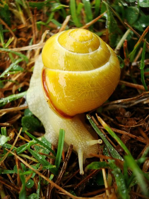 animal snail yellow