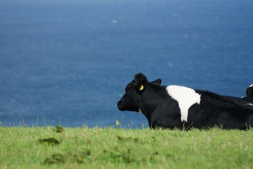 animal nature livestock
