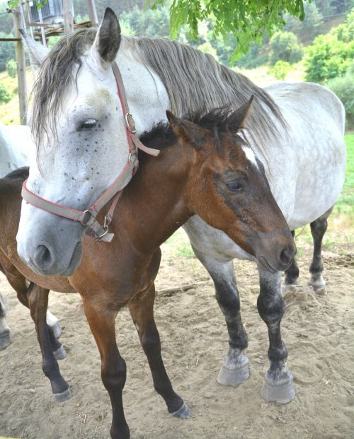 animal colt horse