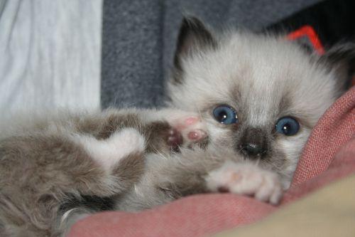 animal feline kitten