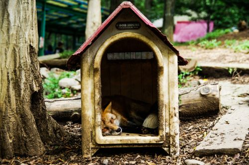 animal fox sleep