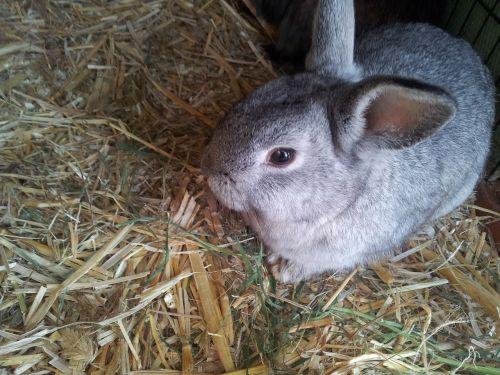 animal hare rabbit
