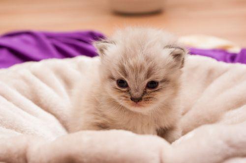 animal children cat persians