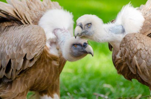 animal photography animals avian