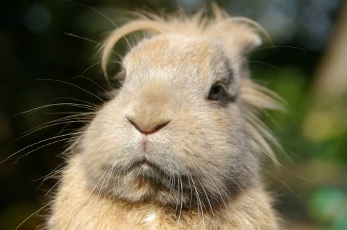 animal portrait rabbit thoughtful