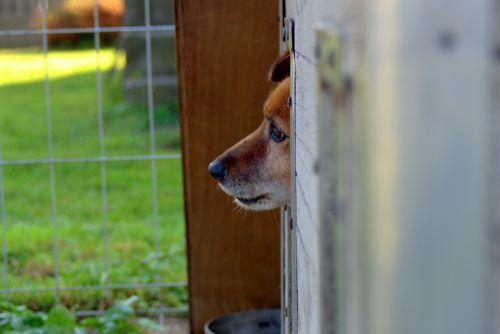 animal shelter dog sad