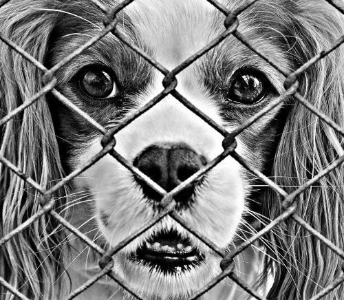 gyvūnų gerovė,šuo,įkalintas,gyvūnų prieglauda,liūdnas,gyvūnų gelbėjimas,šuo išvaizdą,pagalba,sutaupyti,gyvūnai,sielvartas,meilė,prasta gyvūnas,ne,vielos tinklelis,tvora,gyvūnų pasaulis,Skubus atvėjis,gelbėjimas,baisi,bejėgis,mielas,saldus