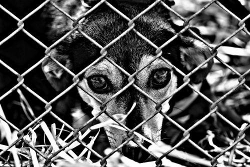 animal welfare dog imprisoned