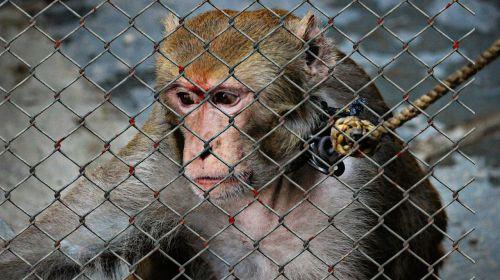 animal welfare cruelty to animals help