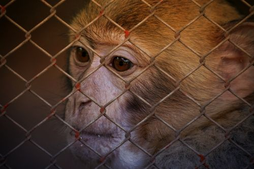 animal welfare help imprisoned