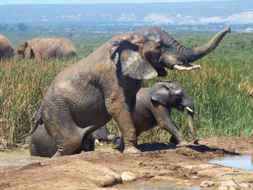 animal world nature elephant