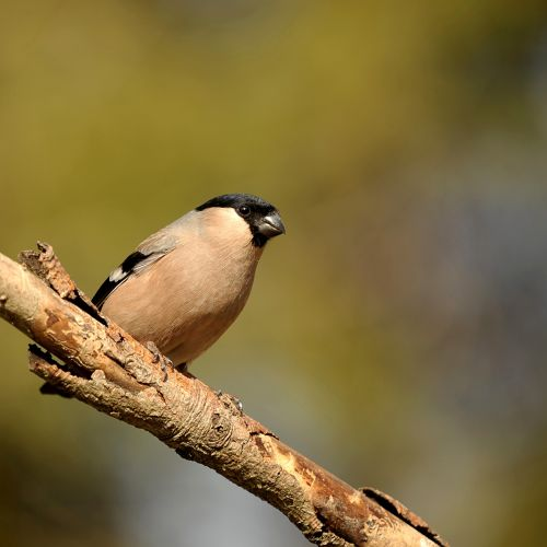 animal world bird nature