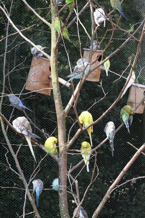 animal world  birds  canaries