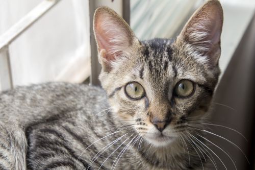 animalia cute cat