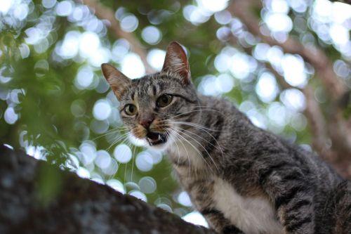 animalia cat nature