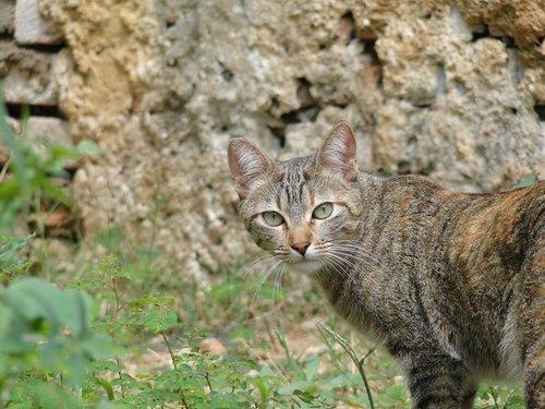 animalia  nature  cat
