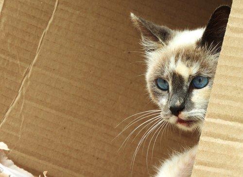 animalia  nice  cat