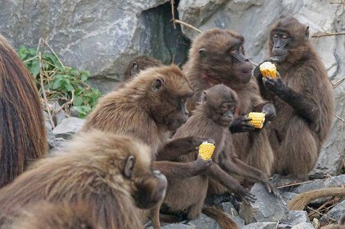 animals primates dscheladas