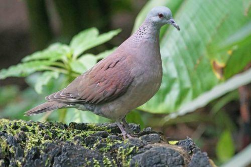 animals bird dove