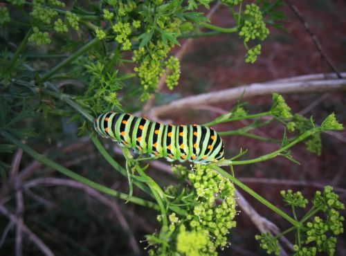 caterpillar insects animals