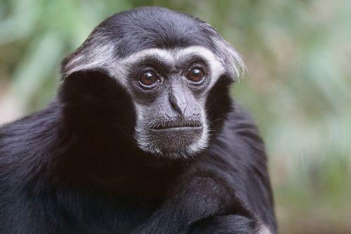 animals primate monkey