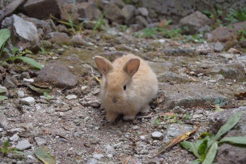 animals baby bunnies