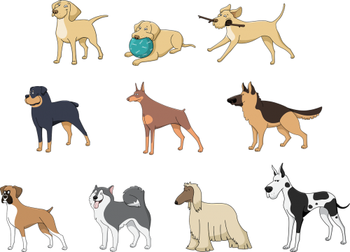 animals pets dog