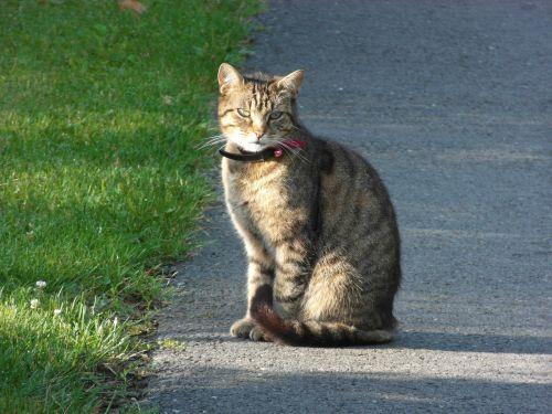 animals cat companion