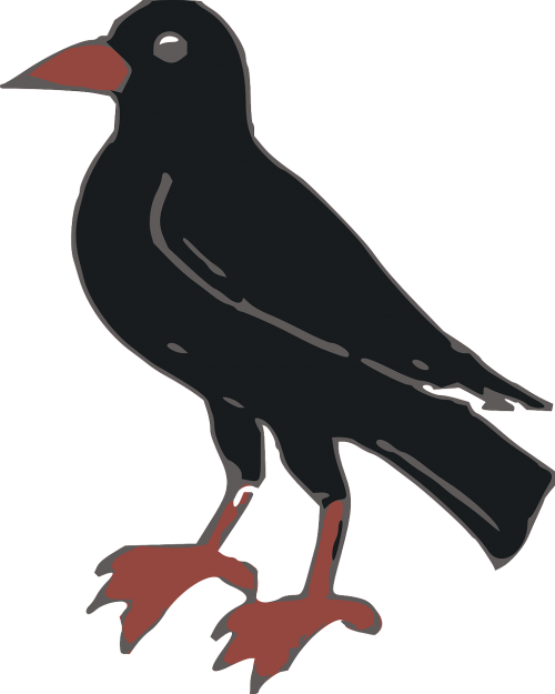 animals bird crow