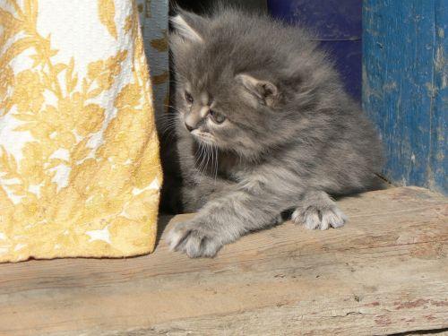 animals cats kitten