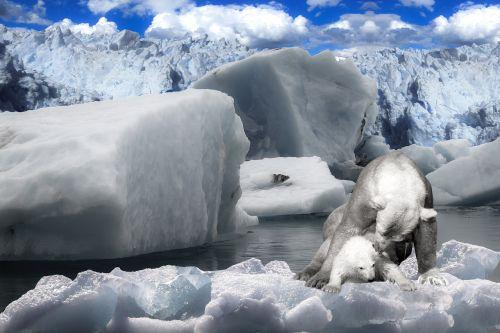 animals polar bear predator