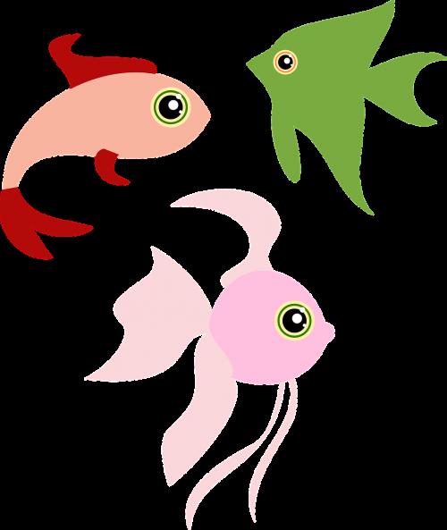 animals fish fishes