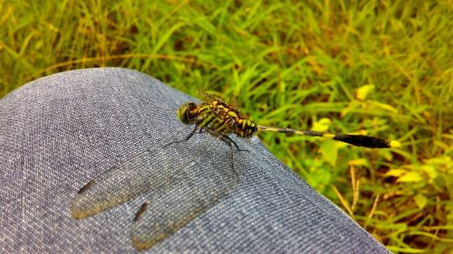 animals dragonfly gorgeous